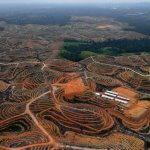 indonesia-us-environment-forests-company-procter-3